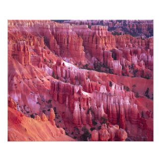 Bryce Canyon, Utah, USA Photo Print