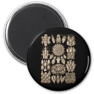 Bryozoa 6 Cm Round Magnet