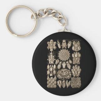 Bryozoa Basic Round Button Key Ring