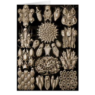 Bryozoa Card