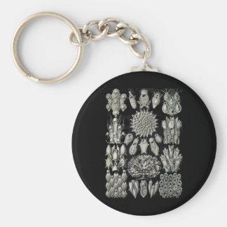 Bryozoa Keychains