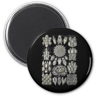 Bryozoa Refrigerator Magnets