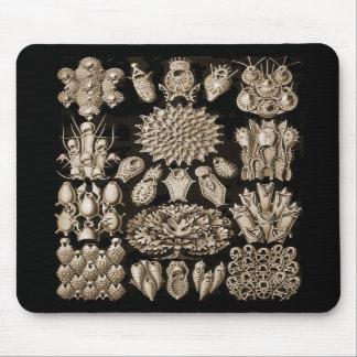 Bryozoa Mousepads