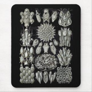 Bryozoa Mousepad