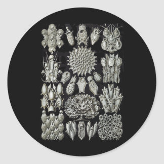 Bryozoa Round Sticker