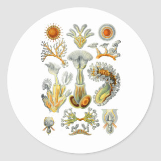 Bryozoa Sticker