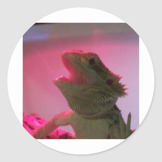 Bubba The Bearded Dragon Classic Round Sticker