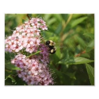 Bubble Bee Buzz 10 x 8 Photographic Print