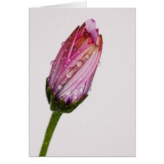 Bubbling daisy card