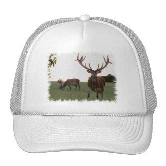 Buck  Baseball Hat