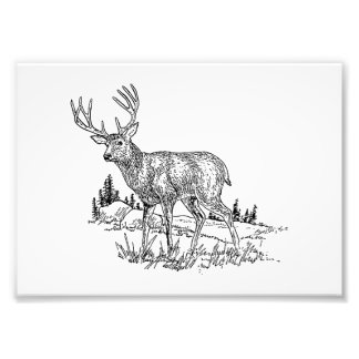 Buck Deer Art Photo