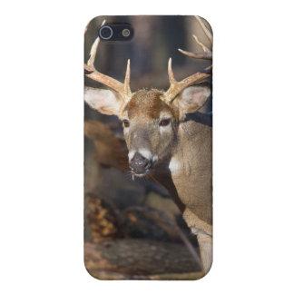 Buck Deer iPhone 5/5S Covers