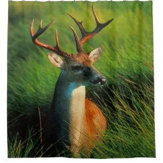 Buck Deer Shower Curtain