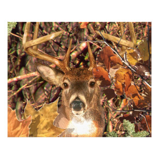 Buck in Camo White Tail Deer Photograph