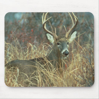 Buck in the Grass Mouse Mat