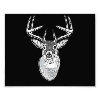 Buck on Black  White Tail Deer Photo