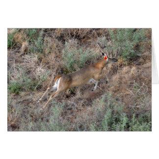 Buck on the Run! Greeting Card