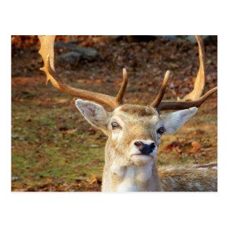 Buck Postcards