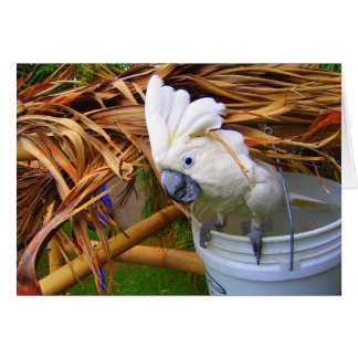 Bucket O' Cockatoo Card