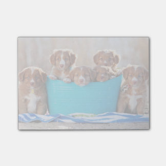 Bucket Of Puppies On The Beach Post-it Notes