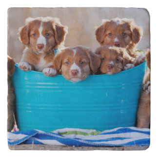 Bucket Of Puppies On The Beach Trivets