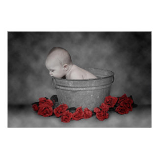 Bucket Roses Poster
