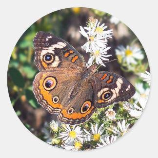 Buckeye Butterfly Round Sticker