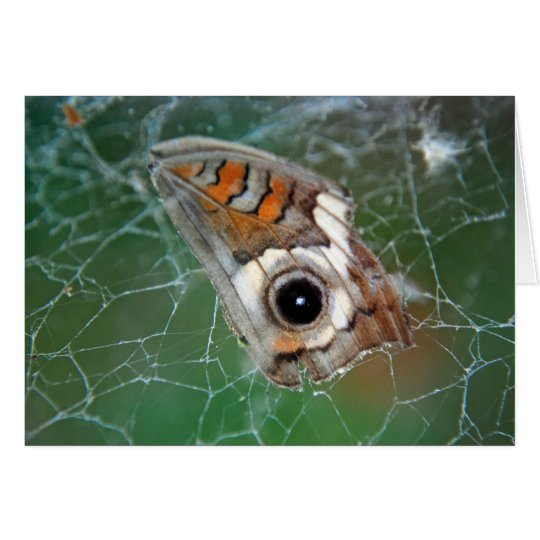 Buckeye butterfly wing in spider web card