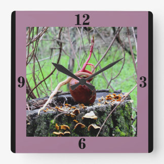Buckeye Tree Sprout Square Wall Clock