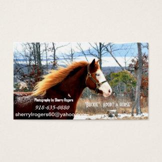 """"""" Buckie""""  Adopt a horse"""