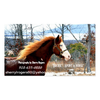 """ Buckie""  Adopt a horse Double-Sided Standard Business Cards (Pack Of 100)"