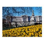 Buckingham Palace, London  flowers Post Cards