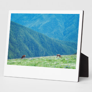 Bucks by the Mountains Photo Plaque