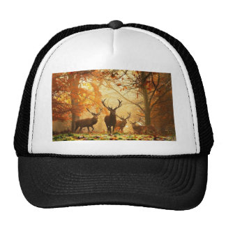Bucks with Antlers Running Through Autumn Forest Hats