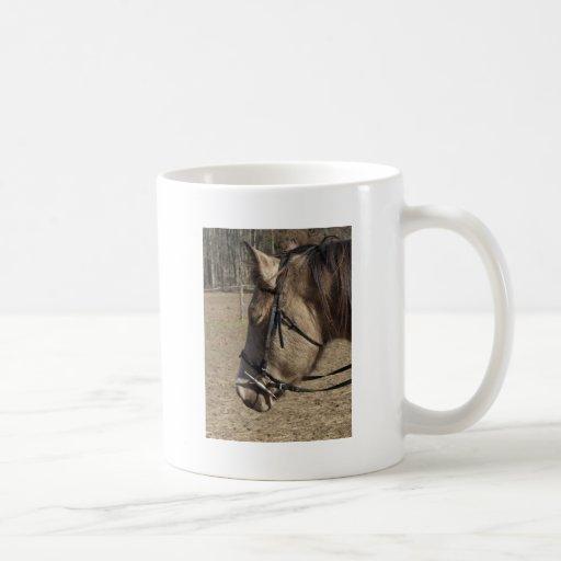 Buckskin Mare, head study Mugs