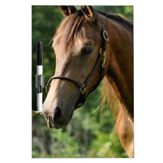 Buckskin Morgan Horse Dry-Erase Whiteboards