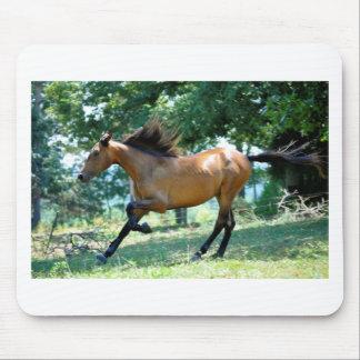 Buckskin Morgan Horse Mouse Pad