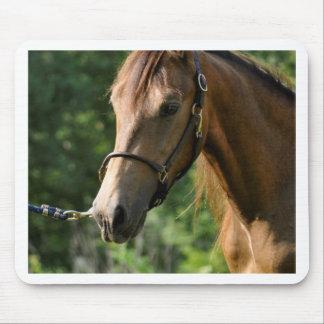 Buckskin Morgan Horse Mousepads