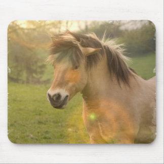Buckskin Pony Mouse Pad