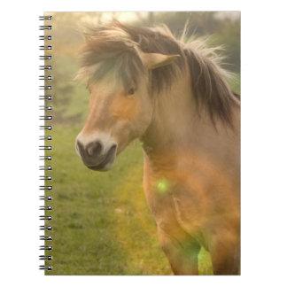 Buckskin Pony Notebook