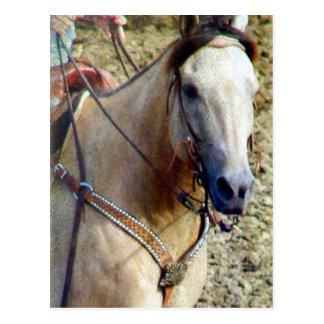 Buckskin Rodeo Horse Postcard