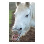 Bucky the Mustang Stationery Paper