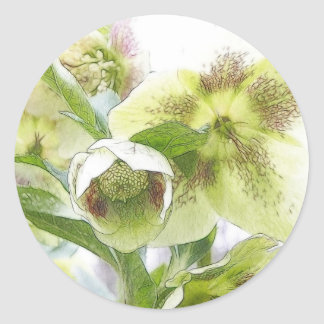 Bud To Blossom - White Hellebores Classic Round Sticker