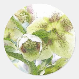 Bud To Blossom - White Hellebores Round Sticker