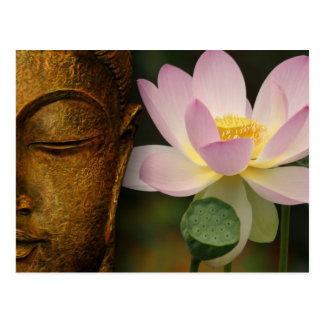 Buddha and flower postcard