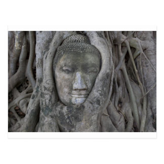buddha in tree.jpg postcard