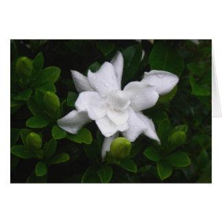 Budding Gardenias Floral Notecard Note Card