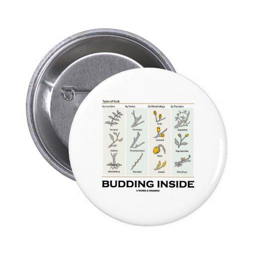 Budding Inside (Types Of Buds Biology / Botany) Buttons