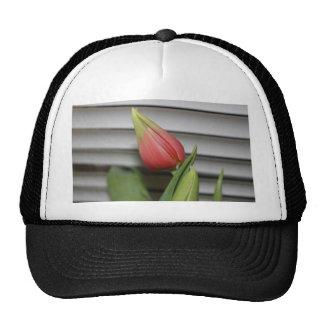 Budding Tulip Trucker Hat