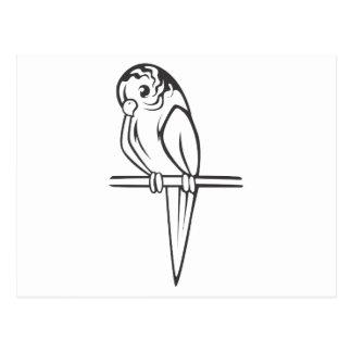 Budgerigar Parrot Bird Postcard